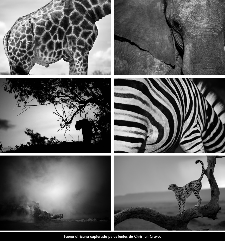Africa Africans - Exposição-2
