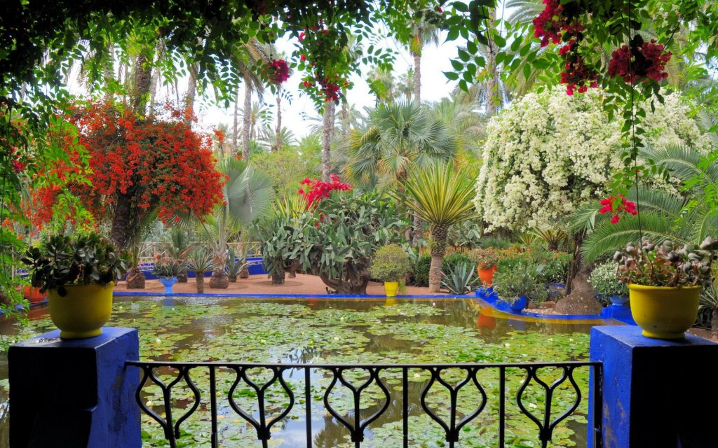 moroco-morocco-marrakech-jardin-majorelle-nature-and-photos-553168
